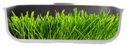 Harecker Pfanne grün